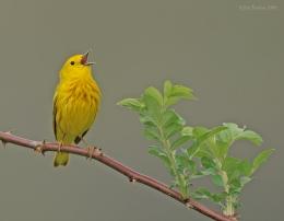 Singing Bird (Woodstock) andSnoopy