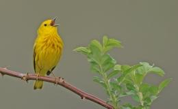 50 Bird SpeciesSounds