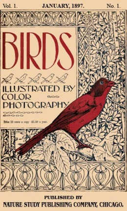 Birds, Illustrated by Color Photography Vol 1, # 1, Jan. 1987 Reactivated