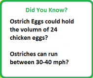 Did You Know Ostriches