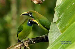 Precious Stones and Birds –Introduction