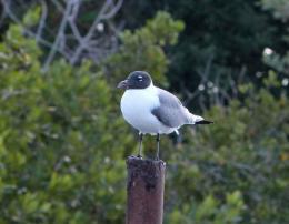 Bible Birds – Sea GullIntroduction