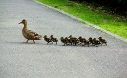 Having A Parade – FamilyCircus