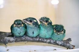 Christmas Hymns With Birds – Christmas Brings Joy To EveryHeart