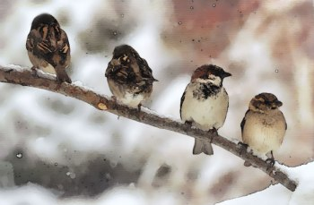 Sparrow on Branch ©©Bing