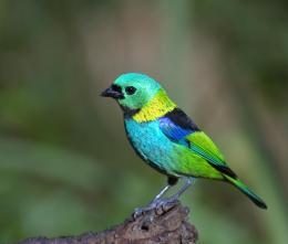 Green Birds ofMarch
