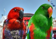 Red and Green ©©Bing