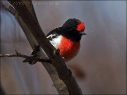 Precious Stones and Birds –Sardonyx