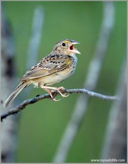 Christmas Hymns With Birds – Joyful, Joyful, We AdoreThee
