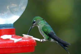 Creation Moment's – Double Life of the Hummingbird