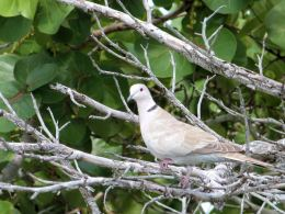 Christmas Hymns With Birds – Hail to the Lord'sAnointed