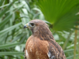 Bible Birds – Hawk Introduction