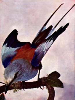 Birds, Illustrated – Volume 1, # 2 – NowReady