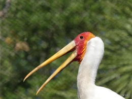Bible Birds – Storks at ZooTampa
