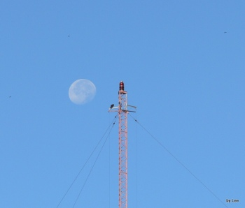 Osprey on Tower with Moon setting behind it- By Lee
