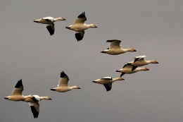 Migration Is Starting And The Birds Are HeadingOut