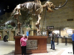 Creation Museum's Mastodon