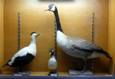 BJU Bird Collection Display Cases 2018