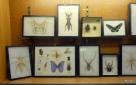 BJU Bug Collection 2018