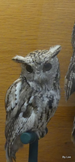 Waterman Bird Collection – Hawks and Owls