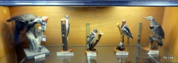 Waterman Bird Collection – Woodpeckers
