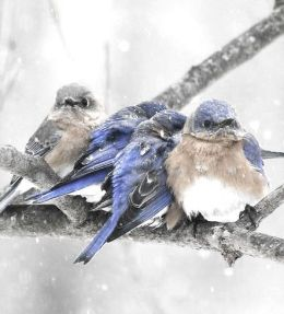 Protecting The Birds In Zoos From ExtremeCold