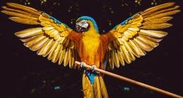 Precious Stones and Birds –Topaz